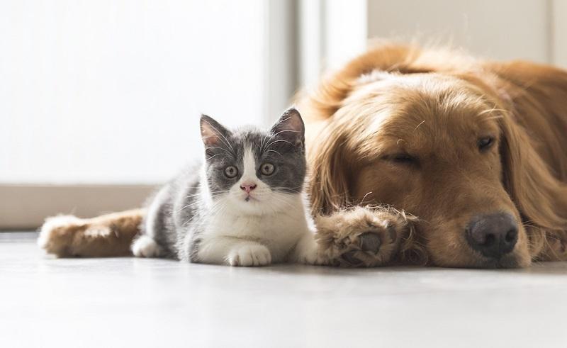 disputes between pets