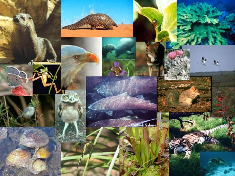 endangered-plants-and-animals